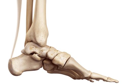 Achilles tendon location