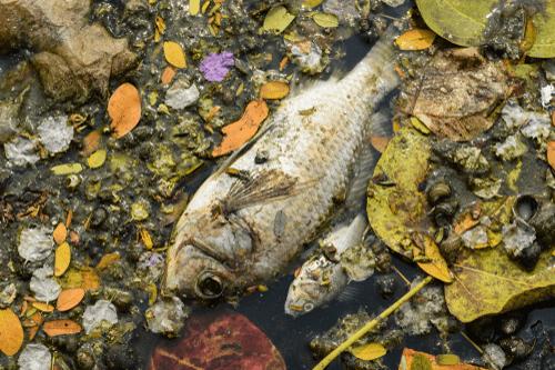 Arsenic poisoning pollution