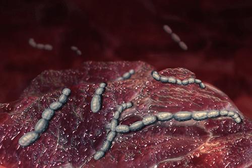 Scarlet fever bacteria