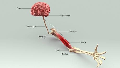 Dyspraxia and motor neuron