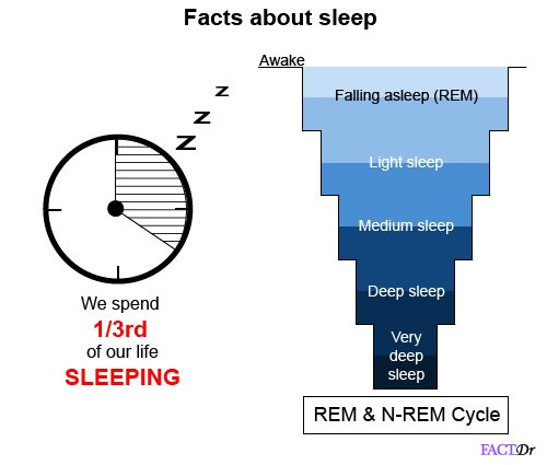 facts about sleep