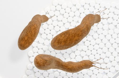 gastritis bacteria H pylori