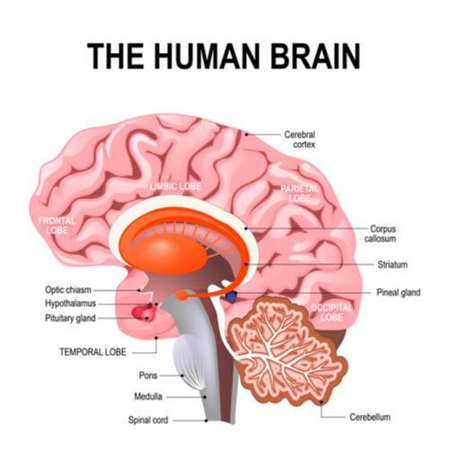 Ataxia cerebellum