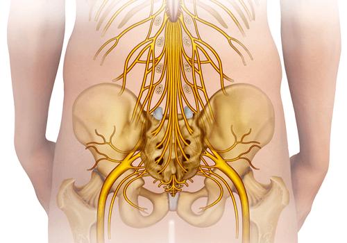 CAUDA EQUINA SYNDROME nerves