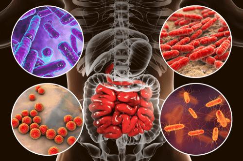 ENTERITIS bacteria