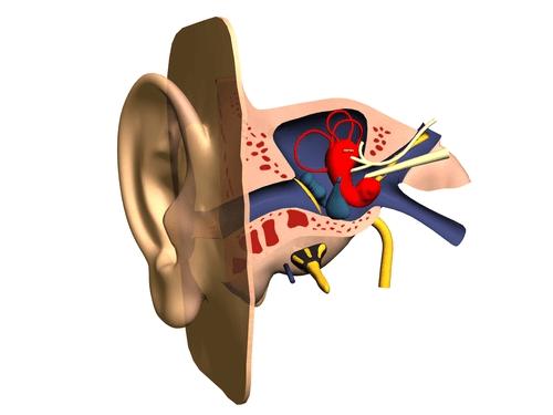 Otitis Media infection