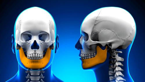TMJ_skull