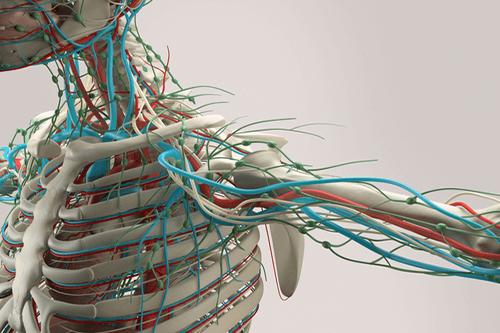 Bone tumor sketelal system