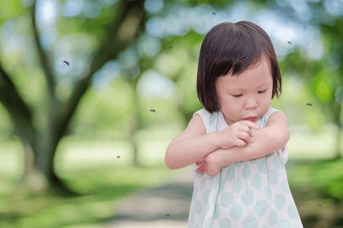Skin rashes mosquito bites