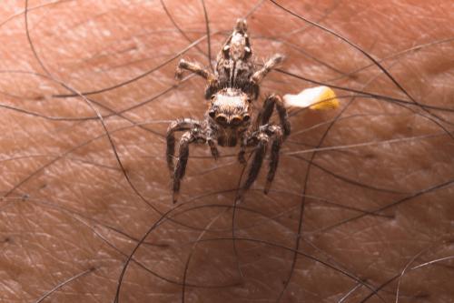 Spider bites skin
