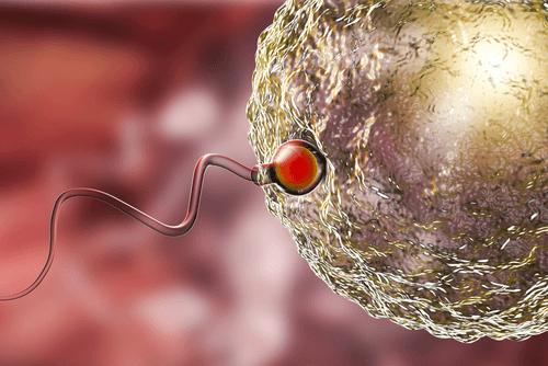 CONCEPTION sperm