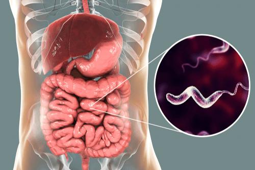 Diarrhoea bacteria