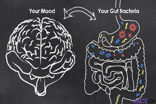 Serotonin gut brain connection