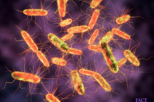Typhus bacteria