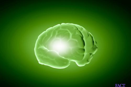 edamame brain