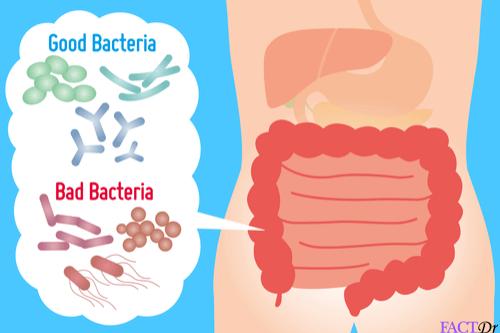 probiotics gut