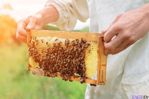 Scarlet Honey Prosztatitis