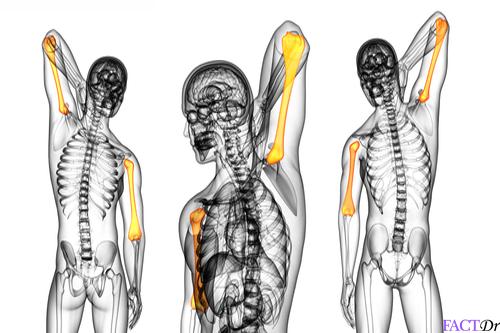 Humerus bone location