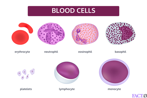 absolute neutrophil count low protein diet