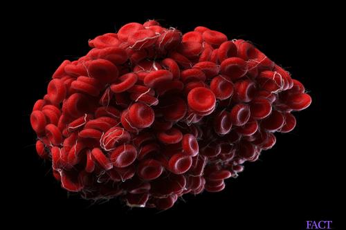 immunoglobulin IgG